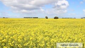 Rural / Farming commercial property for sale at Malunga/783 Cressy-Shelford Road Barunah Park VIC 3329
