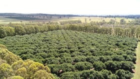 Rural / Farming commercial property for sale at Blackbutt Crows Nest Road Blackbutt South QLD 4314