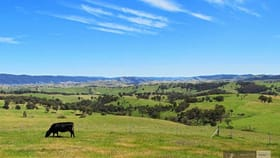 Rural / Farming commercial property for sale at 1119 Buchan-Ensay Rd Reedy Flat VIC 3895