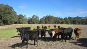 Rural / Farming commercial property for sale at Lot 101 BOUNDARY ROAD Capel River WA 6271