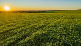 Rural / Farming commercial property for sale at Myall Park Farm, 544 New Farms Road Nericon NSW 2680