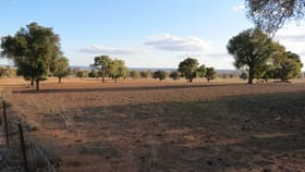Rural / Farming commercial property for sale at 27L Bencubbin Drive Dubbo NSW 2830