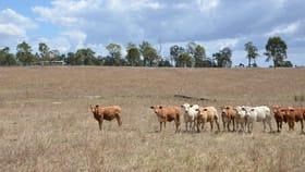 Rural / Farming commercial property for sale at 731 Eureka Station Road Eureka QLD 4660