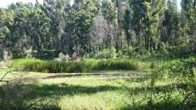 Rural / Farming commercial property for sale at 534 Phillips Swamp Road Busbys Flat NSW 2469