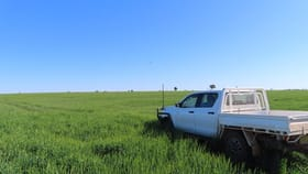 Rural / Farming commercial property for sale at Shannonvale 600 Shannonvale Rd Tottenham NSW 2873