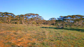 Rural / Farming commercial property for sale at Section 113 Sturt Highway Blanchetown SA 5357