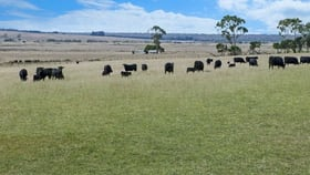 Rural / Farming commercial property for sale at 662 TRELOARS ROAD, CONDAH via Hamilton VIC 3300