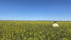 Rural / Farming commercial property for sale at 1 Thomas Lane Lake Cargelligo NSW 2672