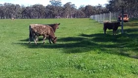 Rural / Farming commercial property for sale at 1535 Fisher Rd Mount Barker WA 6324