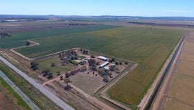 Rural / Farming commercial property for sale at Farm 1078 Murrami Road Murrami NSW 2705