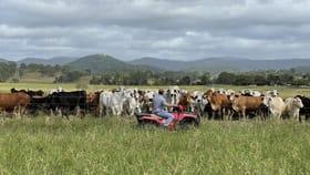 Rural / Farming commercial property for sale at 281 Sarina Homebush Rd Sarina QLD 4737