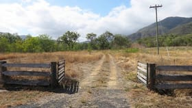 Rural / Farming commercial property for sale at 950 Oaky Valley Ave Mutchilba QLD 4872