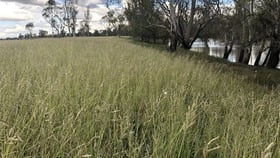 Rural / Farming commercial property for sale at Dalby QLD 4405