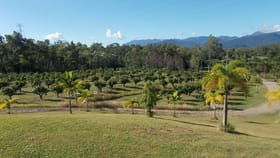 Rural / Farming commercial property for sale at 252560 Bruce Highway Rungoo QLD 4849
