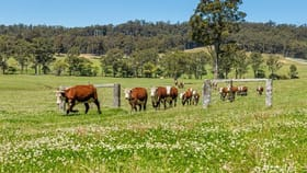Rural / Farming commercial property for sale at Lemon Tree Creek Road Lake Tabourie NSW 2539
