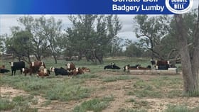 Rural / Farming commercial property for sale at . Yappalee Brewarrina NSW 2839