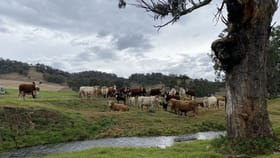Rural / Farming commercial property for sale at 512 Ogunbil Road Dungowan NSW 2340