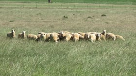 Rural / Farming commercial property for sale at 207L Mendooran Road Dubbo NSW 2830