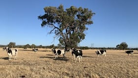 Rural / Farming commercial property for sale at Lot 503 Mitchell Road Benger WA 6223
