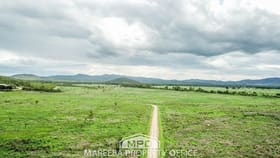 Rural / Farming commercial property for sale at 3225 Mareeba-Dimbulah Road Mutchilba QLD 4872