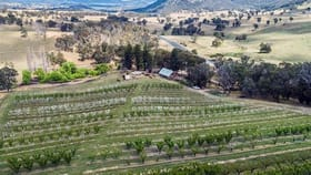 Rural / Farming commercial property for sale at 8116 New England Highway Tenterfield NSW 2372