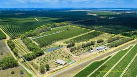 Rural / Farming commercial property for sale at 173 Bonels Road Welcome Creek QLD 4670
