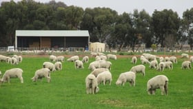 Rural / Farming commercial property for sale at Lot 2 River Road Murraydale VIC 3586