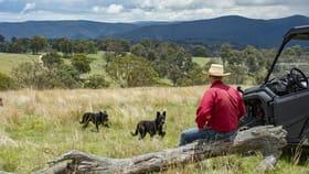 Rural / Farming commercial property for sale at Ellamatta Mccliftys Road Bolivia NSW 2372