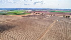 Rural / Farming commercial property for sale at 287 Mount Lewis Road Canowindra NSW 2804
