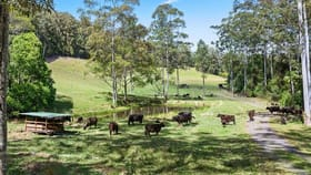 Rural / Farming commercial property for sale at 61 Convincing Ground Road, Karangi Coffs Harbour NSW 2450