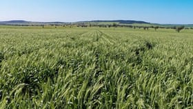 Rural / Farming commercial property for sale at 1 Blue Nobby Road North Star NSW 2408