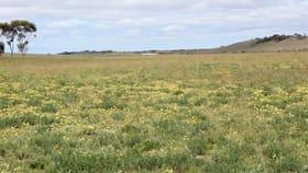 Rural / Farming commercial property for sale at 3862 Carcuma Road Tintinara SA 5266