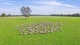 Rural / Farming commercial property for sale at 786 Rocklands Road Balmoral VIC 3407
