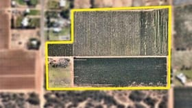 Rural / Farming commercial property for sale at 8, 215 Sheoak Avenue Mildura VIC 3500