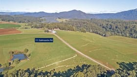 Rural / Farming commercial property for sale at 111 Saltmarshs Road North Motton TAS 7315