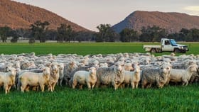 Rural / Farming commercial property for sale at Young NSW 2594