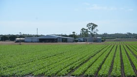Rural / Farming commercial property for sale at 70 EDGERTON ROAD Bowen QLD 4805