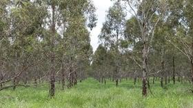 Rural / Farming commercial property sold at Lot 2 Ogilvy Road Wooroolin QLD 4608