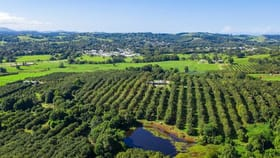 Rural / Farming commercial property for sale at 1035C Hinterland Way Bangalow NSW 2479
