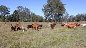 Rural / Farming commercial property for sale at 179 Dray Road Woolooga QLD 4570