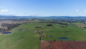Rural / Farming commercial property for sale at 555 Black Hills Road Westbury TAS 7303