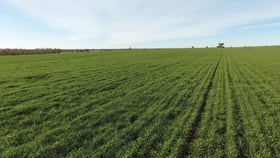 """Rural / Farming commercial property for sale at 1361 """"Boxdale"""" Carlisle Road Condobolin NSW 2877"""