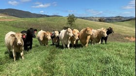 Rural / Farming commercial property for sale at Kia-Ora/Homestead Queens Pinch Road Mullamuddy Mudgee NSW 2850