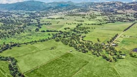 Rural / Farming commercial property for sale at 528 Timor Road Blandford NSW 2338