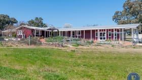 Rural / Farming commercial property for sale at 1818 Barwang Road Young NSW 2594
