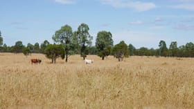 Rural / Farming commercial property for sale at 581 ACRES GRAZING LIFESTYLE Cecil Plains QLD 4407