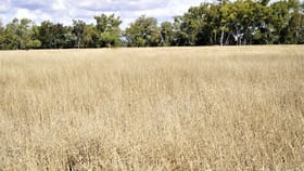 Rural / Farming commercial property for sale at 0 Buckland Terrace Roma QLD 4455