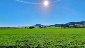 Rural / Farming commercial property for sale at 258 Swanfels Road Yangan QLD 4371