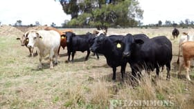 Rural / Farming commercial property for sale at 404 Langlands Road Jandowae QLD 4410