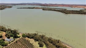 Rural / Farming commercial property for sale at 291 Curlew Road Lake Cargelligo NSW 2672